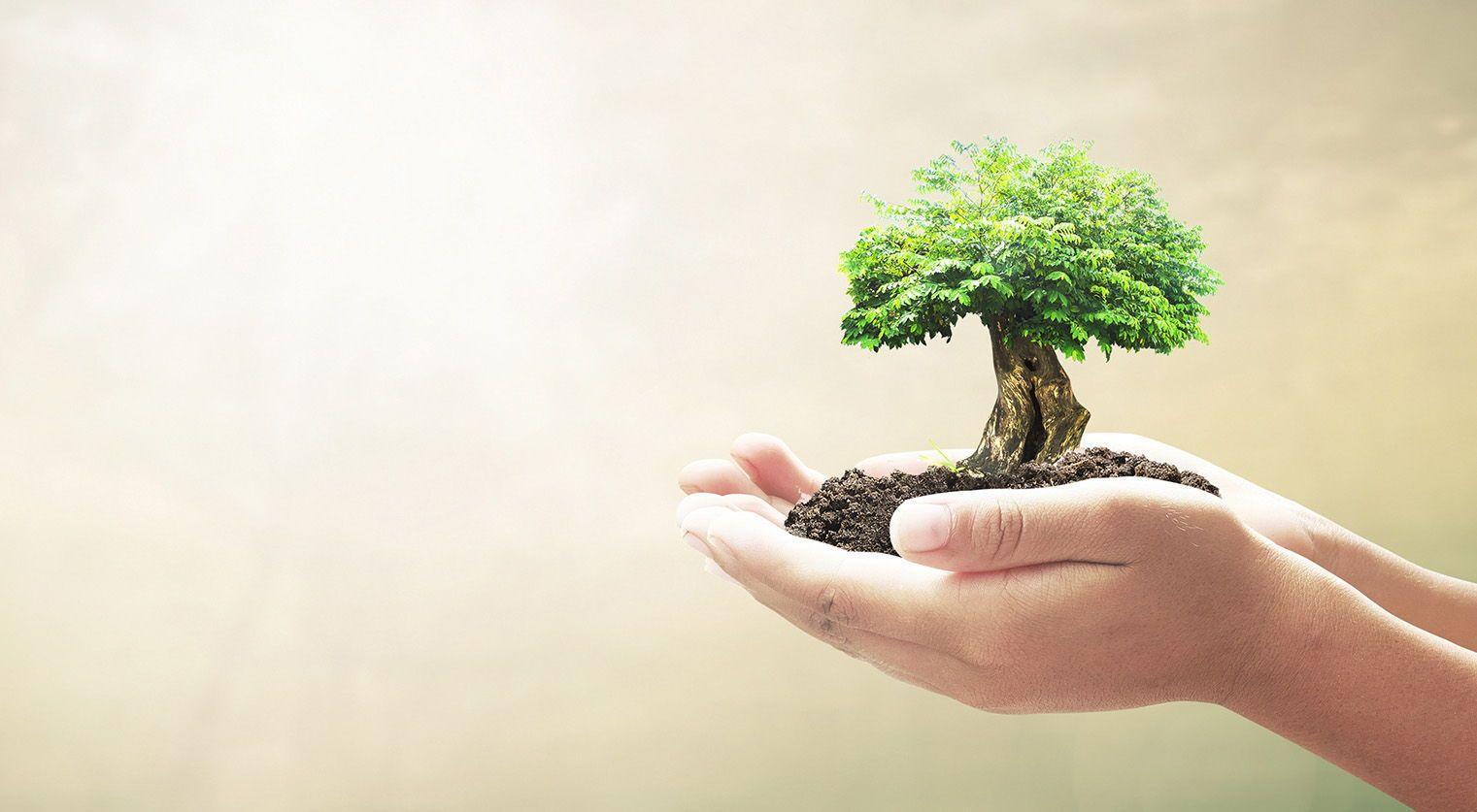 eco-conscious consumers